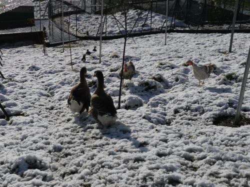 Casa Felisa Marcelle nevada 2